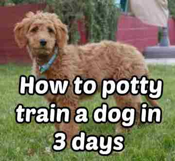 How To Potty Train A Dog In 3 Days Dog Restraint